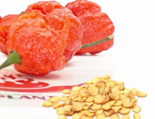 How to Toast Dry Carolina Reaper Peppers