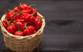 scorpion pepper wholesale online