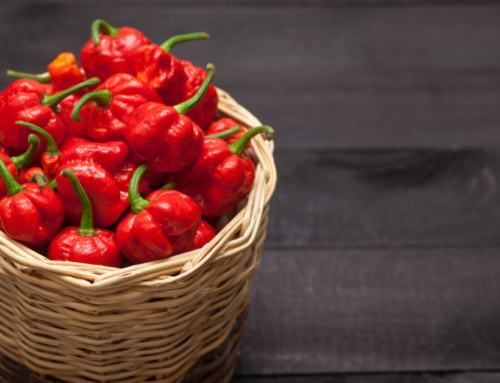 Scorpion Pepper Wholesale Online: 3 Places to Find Scorpion Pepper