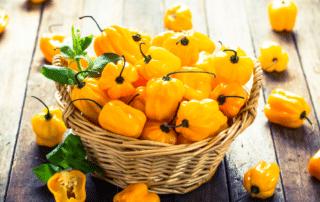 buy habanero peppers online