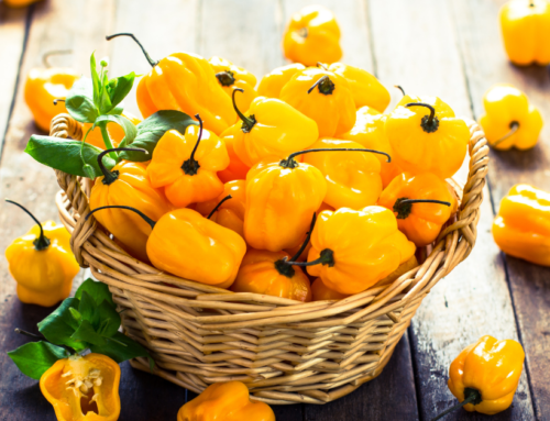Where to Buy Habanero Peppers Online