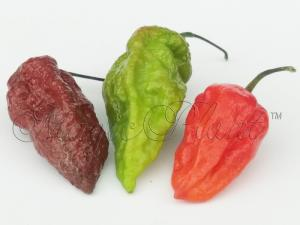 Pepper-Samples